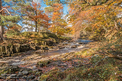 Autumn at Low Force Oct 2018 (Richard Laidler) Tags: aonb areaofoutstandingnaturalbea autumn autumncolour autumncolours autumntints beech bluesky bowlees bright cascade cascades clear color colors countydurham deciduous fagussylvatica fall fine globalgeopark landscape leaflitter lowforce northeastengland northpenninesaonb rivertees riverbank riverbanks rock rocks sun sunny sunshine teesdale trees uk upper upperteesdale vivid waterfall waterfalls wood wooded woodland woods areaofoutstandingnaturalbeauty