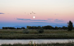 Moonrise (Patricia Henschen) Tags: alamosacolorado sunset mountain alamosa colorado town clouds mountains wetland sanluisvalley roadside autumn fall moon moonrise birds sanjuanmountains sanjuan