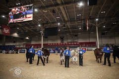 RoyalWinterFairSM_20181102_31 (DawnOne) Tags: royal winter fair national junior beef heifer show opening day press conference copyright linda dawn hammond 2018 indyfoto dawnone