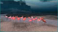 Cherchez les intrus ! (Tim Deschanel) Tags: tim deschanel sl second life exploration landscape sea mer flamand rose binemust flamingo animal