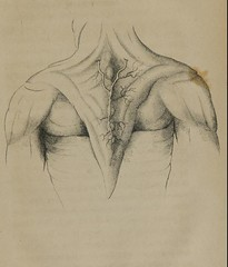 This image is taken from Anatomical investigations, comprising descriptions of various fasciae of the human body : the discoveries of the manner in which the pericardium is formed from the superficial fascia, the capsular ligament of the shoulder joint fr (Medical Heritage Library, Inc.) Tags: anatomy fascia medicalheritagelibrary medicineintheamericas usnationallibraryofmedicine americana date1824 id61031340rnlmnihgov