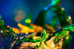Green Leaf Venetian (Thomas Hawk) Tags: america bayarea california chihuly dalechihuly goldengatepark greenleafvenetian museum sf sfbayarea sanfrancisco usa unitedstates unitedstatesofamerica deyoung deyoungmuseum sculpture us fav10