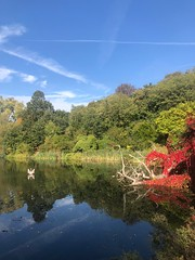 Fall on the Heath (marc.barrot) Tags: landscape noon bright green blue red pond swan reflection park uk nw3 london heath hampstead autumn fall