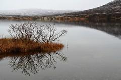 speiling (KvikneFoto) Tags: landskap nikon tamron høst autumn fall snø snow