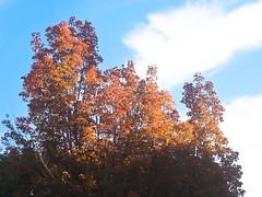 Fall Leaves Morning 2 of 2 (Orbmiser) Tags: olympus 40150mm f4056 r 43rds em1 mirrorless omd ore oregon portland autumn olympus40150mmf4056r leaf leaves fall