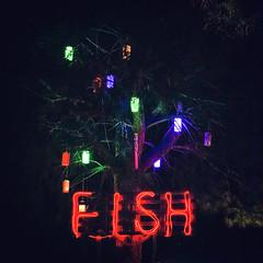 Fish (Melissa Maples) Tags: kemer turkey türkiye asia 土耳其 apple iphone iphonex cameraphone autumn black dark night square 11 fish text red lights tree