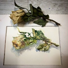 Day 1171. The #mfa201840rosepainting #painting for today. #watercolour #watercolourakolamble #sketching #stilllife #flower #art #fabrianoartistico #hotpress #paper #dailyproject (akolamble) Tags: mfa201840rosepainting painting watercolour watercolourakolamble sketching stilllife flower art fabrianoartistico hotpress paper dailyproject