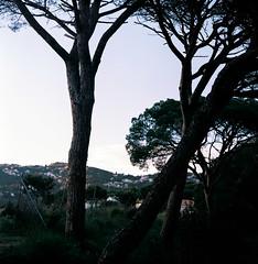 Dalmau at dusk (fedorrrz) Tags: kiev88 film ishootfilm square spain calella dusk pine middleformat 120