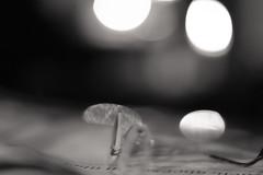 "reading will do good to your soul (CONTROTONO) Tags: bokeh macro photography nature canon portrait ""photo day"" ""bokeh photography"" ""nature photo bokehlicious ""street ""macro photographer ""depth field"" art flowers love like dof shotz landscape ""long exposure"" light perfection beautiful photoshoot green mood focus travel panorama ""light lights ""through lens"" ""black white"" symmetry kings sky follow street ""fast ""wide open"" aperture"""