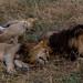 Safari Flickr (136 of 266)