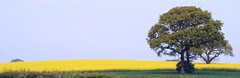 A Family Tree (antonychammond) Tags: land landscape trees rape field countryside sky blue green eastsussex england thegalaxy hedge contactgroups greatphotographers scenicsnotjustlandscapes fugitivemoment