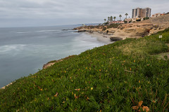La Jolla : Iceplant and Palms (Photos By Clark) Tags: california lajolla beachshots subjects northamerica location canon2470 canon5div unitedstates sandiego cities locale places where us iceplant lightroom thirteenseconds longexposure thesandiegoist