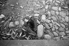 (@Bino) Tags: leica zeiss 28mm f28 rollei rpx film pellicola street urban black white