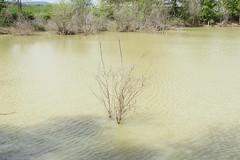 (barbieri simone) Tags: simonebarbieri 35mm italy nature green archive 2012 water natural
