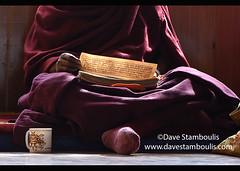 Gelugpa monk reading Buddhist scripture, Diskit Monastery, Nubra Valley, Ladakh, India (jitenshaman) Tags: travel worldtravel destination destinations asia asian india indian ladakh ladakhi leh tourism tibetan tibetanbuddhism buddhist buddhism diskit deskit diskitgompa deskitgompa monastery gompa monastic monk monks tradition traditions traditional nubra nubravalley ritual culture cultural religion gelugpa shadow shadows light scripture read sit meditation meditate puja robe sitting reading sanskrit
