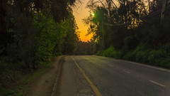 Camino Cerro San Cristóbal (wladimir.zuniga) Tags: carretera árbol bosque cielo madera hierba