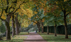 Bute Park in Cardiff on a sunny autumn day. (pepecott) Tags: nikon d7200