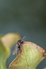 D75_5100 (crispiks) Tags: bugs its life nikon r1c1 d750 105 micro 28