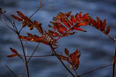 Autumn III (Rudi Pauwels) Tags: goteborg gothenburg sverige sweden schweden fall autumn 18270mm tamron tamron18270mm nikon d7100 nikond7100