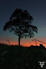 Baum im Abendhimmel (Dagobert1980_GPS) Tags: baum nacht sonnenuntergang wetter badkissingen dämmerung