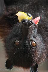 pairi daiza (Vincent Vercamst) Tags: animal parc nikon nikond750 animeaux zoo nikon80200 pairidaiza