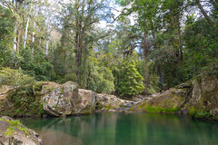 Green Water and Rainforest (Merrillie) Tags: landscape ladieswell nature australia stream hunterrivercatchment newsouthwales rocks upperallyn nsw creek allynriver river nationalpark hunterregion green outdoors waterscape allynbrook stones barringtontopsnationalpark water