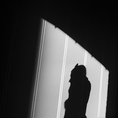 8 am (RoryO'Bryen) Tags: shadows cambridgeuk sombra light morning street roryobryen rolleiflex rolleiflex28d kodaktrix rodinal selfdeveloped standdeveloped copyrightroryobryen cambridge film analoguephotography developing 1100 streetphotography streetlife