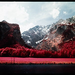Meadow (Kodak Aerochrome) thumbnail
