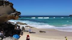MVI_5747 Dogs playing in waves on Tamarama Beach (drayy) Tags: sculpturebythesea sculpture sydney nsw australia exhibition display bondi tamarama video art artwork dog dogs doggy doggies waves water play playing