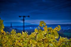 yellow and blue (blattboldt) Tags: zeiss sony ilce7rm3 alpha7riii manualfocus manualiris manualexposure specialthankstochristophecasenavefromzeissforhispersonalinvolvementinthedevelopmentoftheloxialenseline ⚶ emount loxia2485 loxia2485sonnar 85mm 51695547 sonnar topographic europe germany thuringia jena kunitz wine vineyard