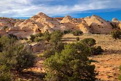 Albino Coyote Buttes (Chief Bwana) Tags: az arizona pariaplateau vermilioncliffs navajosandstone psa104 chiefbwana geology