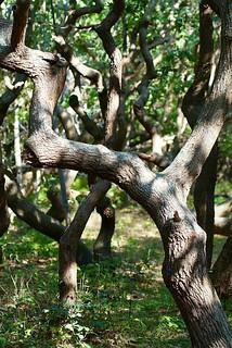 wunderschöne Bäume