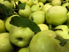 Green Apples (Lux Llama Productions) Tags: barn apple picking fall natick framingham lookout farms family couple 2018 apples many plenty lot hay leaf leaves crate box peach pear plant plants maple trees tree grass grape grapes bench orange picnic red