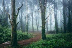 Cathedral of the Pines II (J C Mills Photography) Tags: sintra portugal forest woodland trees mist fog
