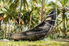 Abandonned artistic wooden canoe on a lonely beach (arnaud_martinez) Tags: beach blue coast india kerala sky srilanka water abandonned boat canoe caribbean cloud coconut color colorful fish fishing hawai horizon leaves maldives net palm palmtree peaceful quite relax row sand sea wood wooden