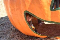 DSC_2570 (earthdog) Tags: 2018 needstags needstitle nikon d5600 nikond5600 18300mmf3563 fall autumn pumpkinpatch spinafarms farm scooter pumpkin food fakefood