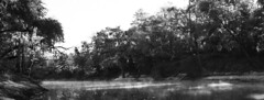Suwannee River Florida (shultstom) Tags: suwanee river florida mist swamp tom shults black white