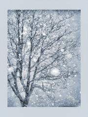 Дерево и снегопад / Tree and snow (tatiana.ch) Tags: стилизация фотоживопись фото2009 фото2018 деревья пейзажгородской снег снегопад паспарту dap painting phototopainting ownphoto tree cityscape snowfall passepartout aquarell акварель