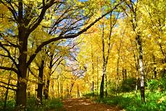 Prior Lake, Minnesota. (Liz Nemmers) Tags: lakefrontpark minnesota prior lake priorlake landscape nature fall fallfoliage autumn twincities onlyinmn nikon nikond3100 water trees trail park woods