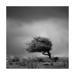 Moorland tree (Nick green2012) Tags: square silence tree minimalism blackandwhite moorland infrared