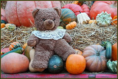 Teddybär ... lässt grüßen ... (Kindergartenkinder 2018) Tags: teddy bär essen gruga park kindergartenkinder herbst