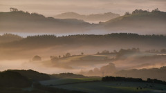Rolling Devon (Picture South West) Tags: lumix gx7 tamron mist fog trees fields sunrise dawn sidelight