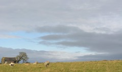 Uneventful (Tony Tooth) Tags: nikon d7100 nikkor 50mm f18g field sheep skyline sky barn elton derbyshire england farming farmland
