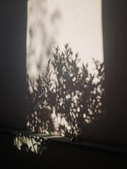P2250225 (mkreibohm) Tags: autumn fall minimal minimalism urban street plants plant texture shadow olympusomdem1 micro43 microfourthirds
