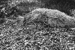 Things Left Behind (22) (Dungeness)-03274 (G.K.Jnr.) Tags: landscape historic foliage vegetation rope deserted desolate discarded dilapidation seaside beach shingle outdoor interest touristattraction monochrome bw blackandwhite blackwhitephotos rural dungeness romneymarsh kent unitedkingdom fujix apsc xh1 wood