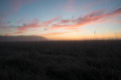 _DSC9490-HDR.jpg (thomasresch) Tags: sonneaufgang sun nordhaide panzerwiese nebel hartelholz sunrise sonne