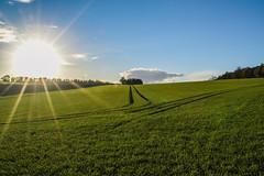 Sunday sun day (Paul Wrights Reserved) Tags: sun sunday sunburst sundaysliders sliderssunday field fields sky landscape landscapes landscapephotography skyscape clouds tree trees bluesky