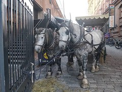 Sopiihan sitä tuossa olla, hevosen #finlayson #tampere