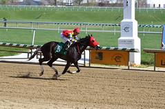 "2016-04-01 (39) r6 Kevin Gomez on #5 Big House for the win (JLeeFleenor) Tags: photos photography md maryland marylandhorseracing marylandracing jockey جُوكِي ""赛马骑师"" jinete ""競馬騎手"" dżokej jocheu คนขี่ม้าแข่ง jóquei žokej kilparatsastaja rennreiter fantino ""경마 기수"" жокей jokey người horses thoroughbreds equine equestrian cheval cavalo cavallo cavall caballo pferd paard perd hevonen hest hestur cal kon konj beygir capall ceffyl cuddy yarraman faras alogo soos kuda uma pfeerd koin حصان кон 马 häst άλογο סוס घोड़ा 馬 koń лошадь outside outdoors"