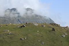 cabane de berger et le Mont Blava (bulbocode909) Tags: valais suisse valdesdix montblava montagnes nature cabanes rochers brume nuages vert bleu paysages groupenuagesetciel